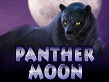 Онлайн казино и автомат Panther Moon